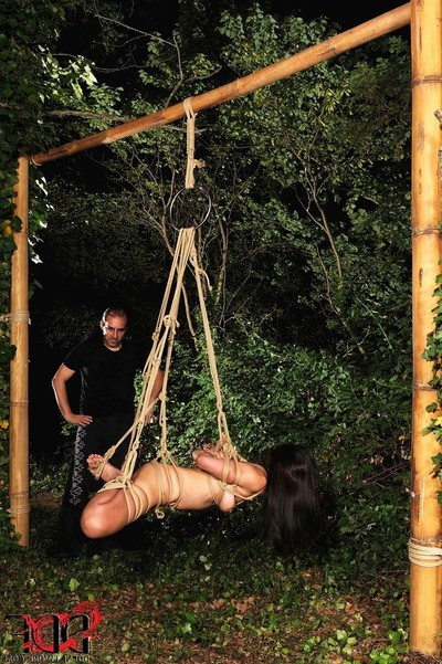 Marica hase benefits from attached up and hung in the forest