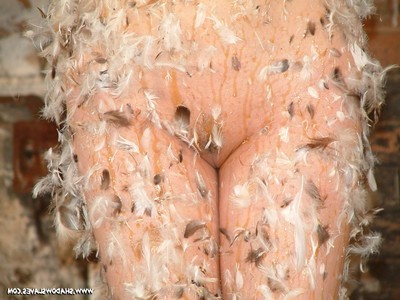 Captive babe kumi swine is roofed in treacle and feathers