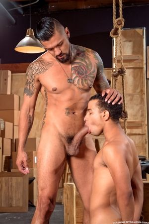 raging stallion regular 184