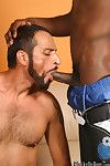 Kick off b lure bitch gets anal penetration by black meats